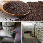 Mustard Seed or Mustard Grain