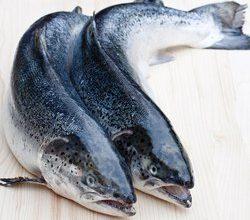 frozen salmon price in ghana